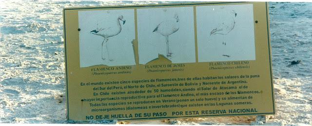Foto 11 - Cartaz sobre flamingos.jpg