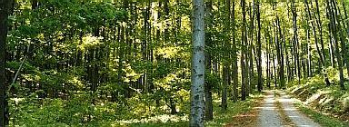 b4889-bosquedeviena-wiki