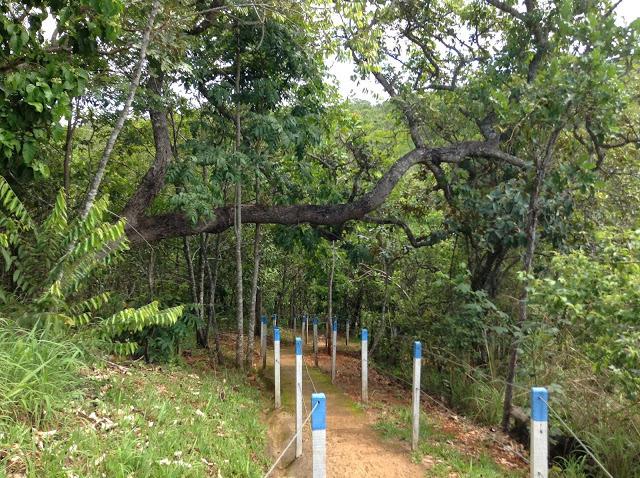 Foto 7 - Caminho da Cachoeira