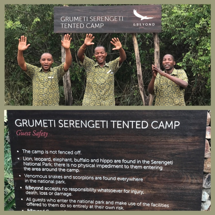Foto 14 - Serengeti Camp