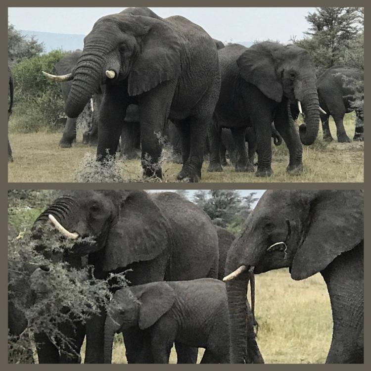 Foto 2 - Grumeti - Serengeti