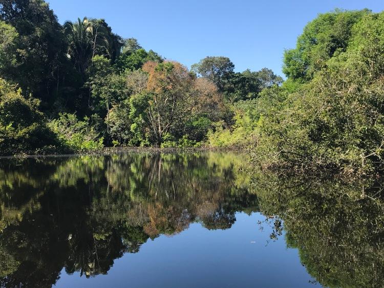 Foto 33 - Floresta submersa -